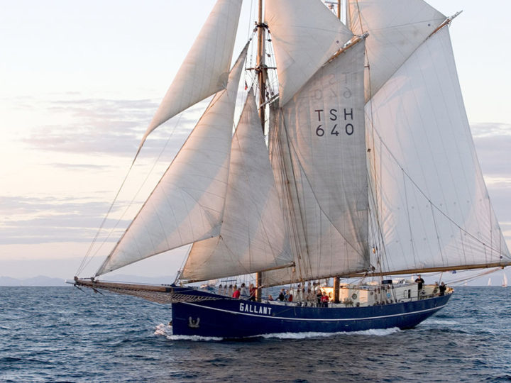 De Gallant – Blue Schooner Co.